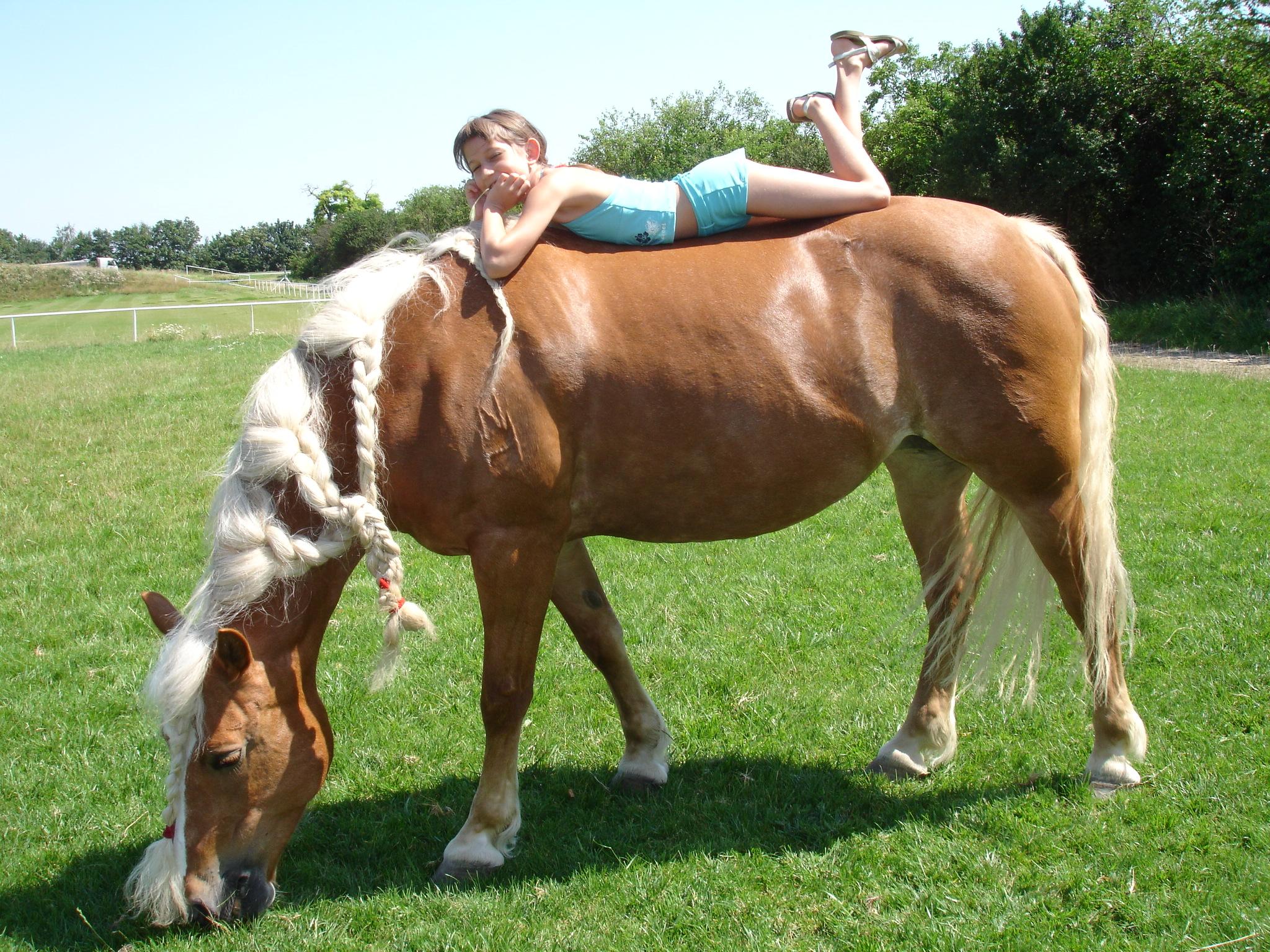Groß Pony Pferd Malvorlagen Zeitgenössisch - Malvorlagen Von Tieren ...